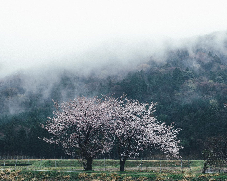 Ljepote Japana