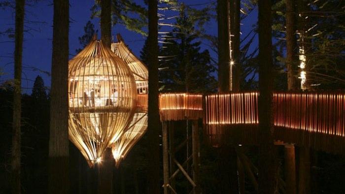 redwoodstreehouse