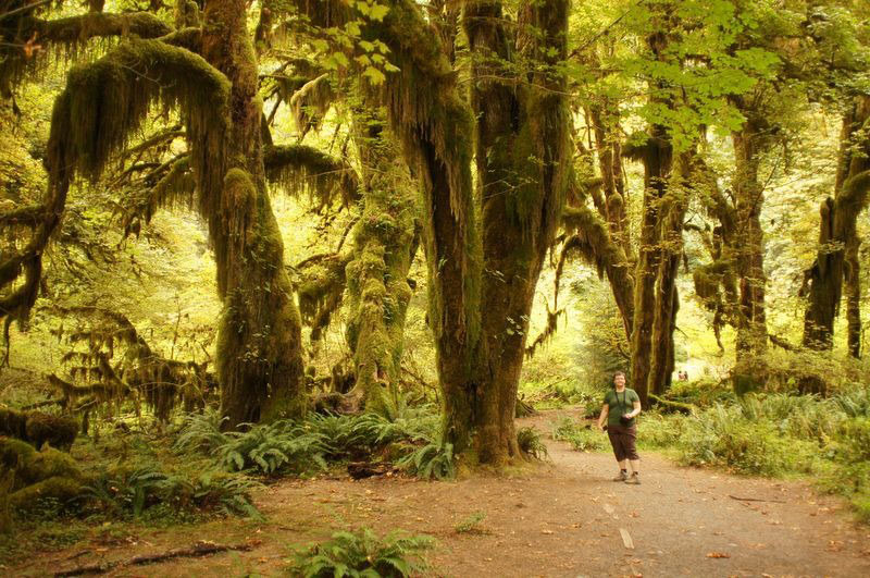 Bajkovita šuma prekrivena mahovinom nalazi se u SAD-u