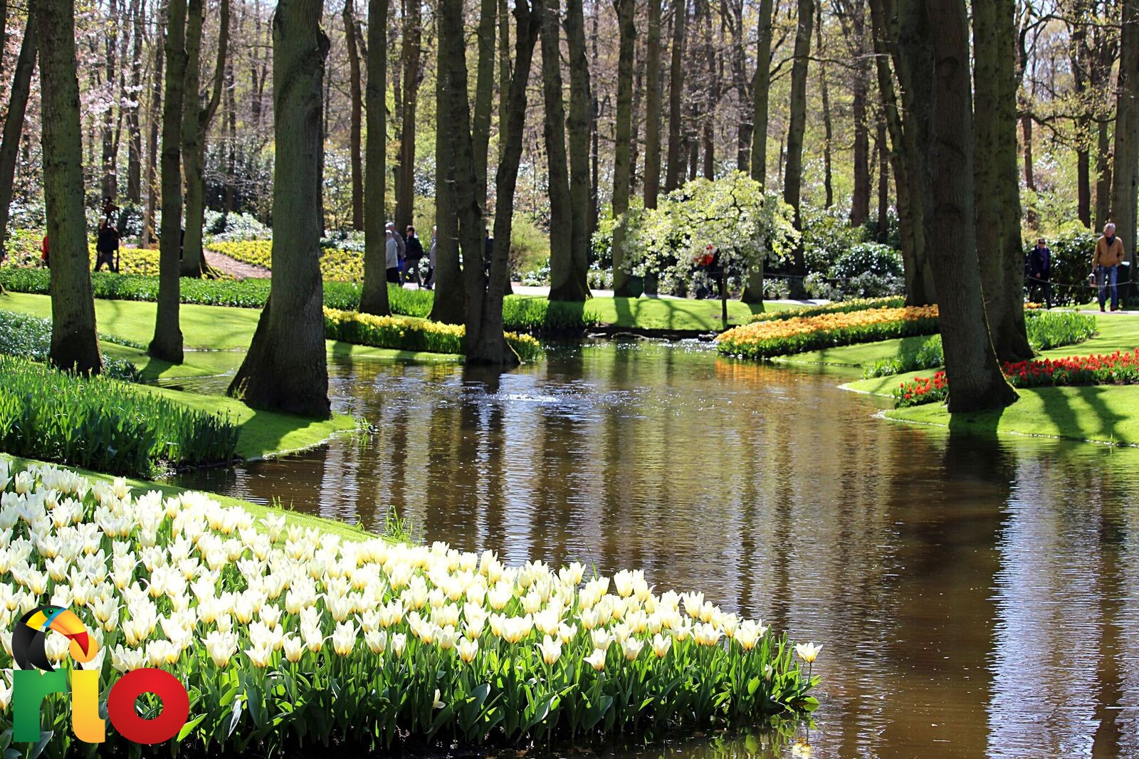 park-tulipana