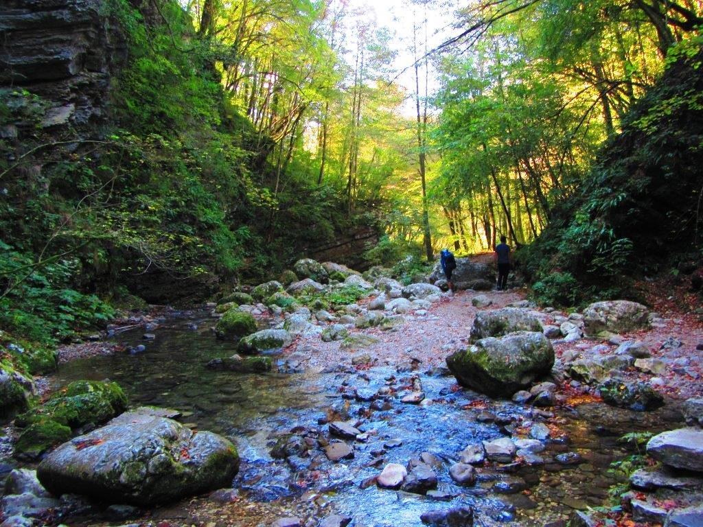 Šuma u Sloveniji