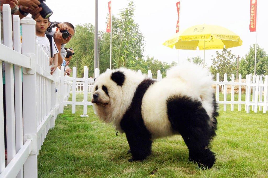 Farbanja životinja u Kini