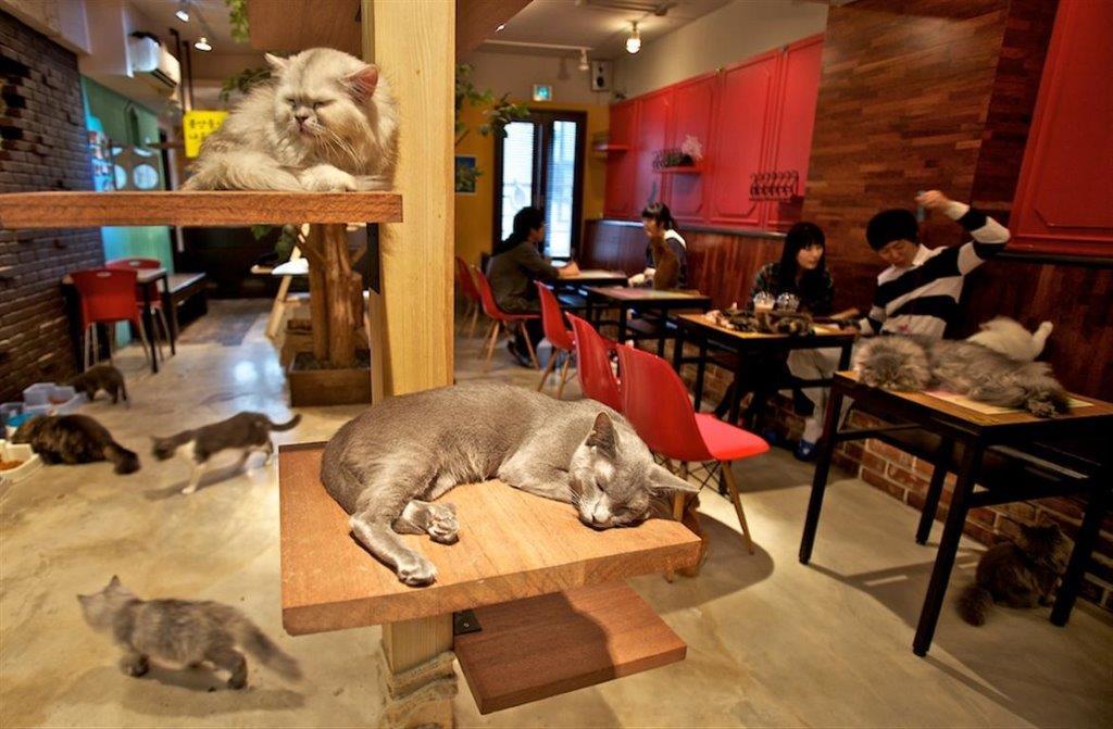 kafići za mačke u Japanu