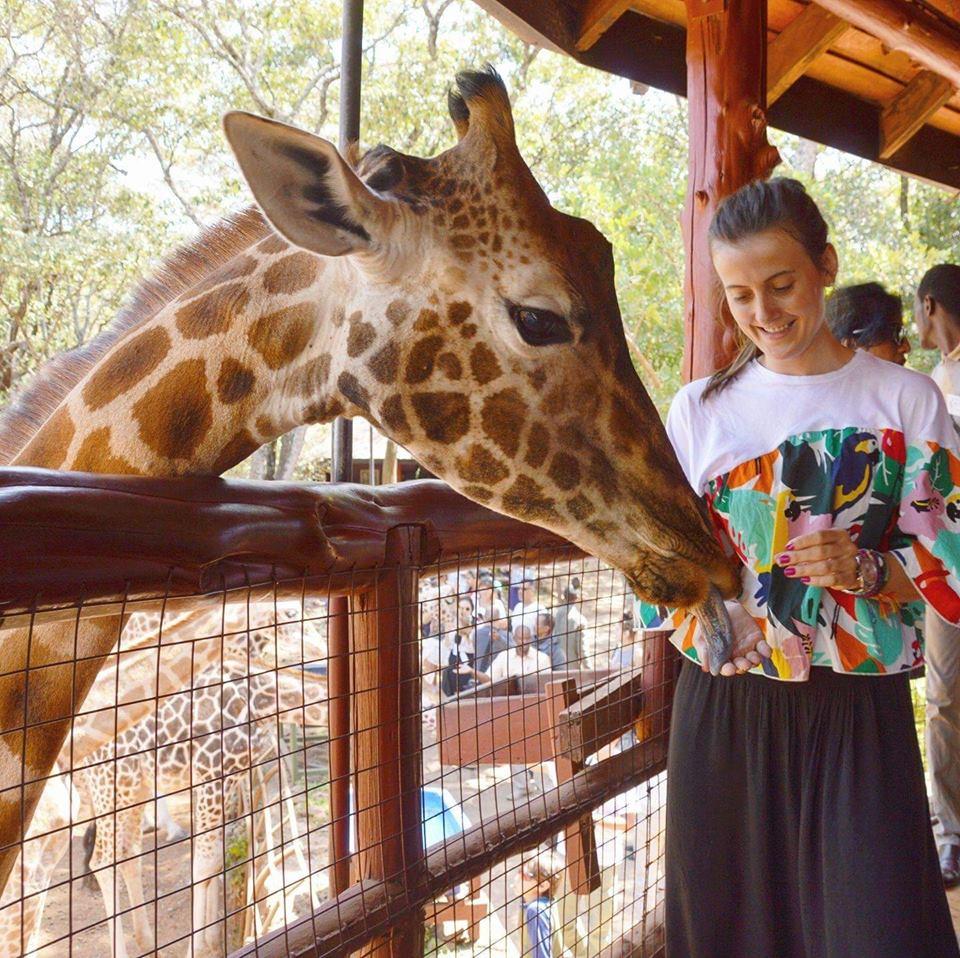safari u Africi