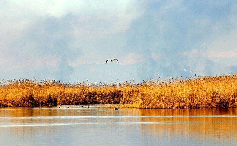 Paliastomi jezero