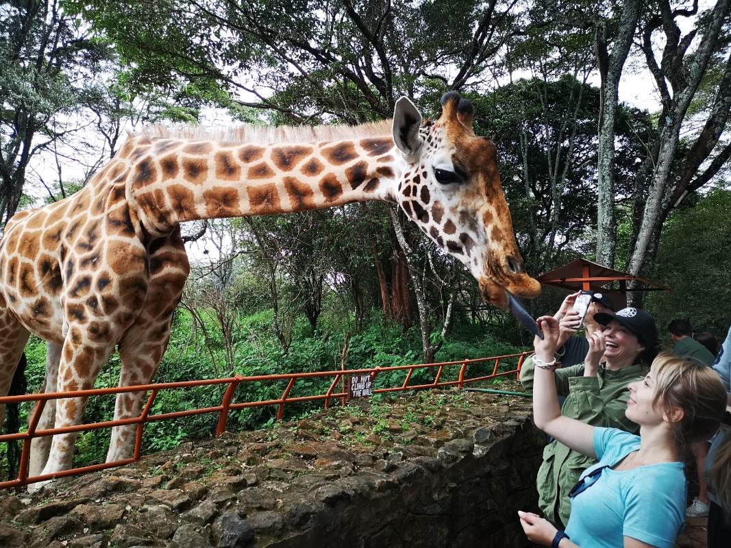 Giraffe center Najrobi