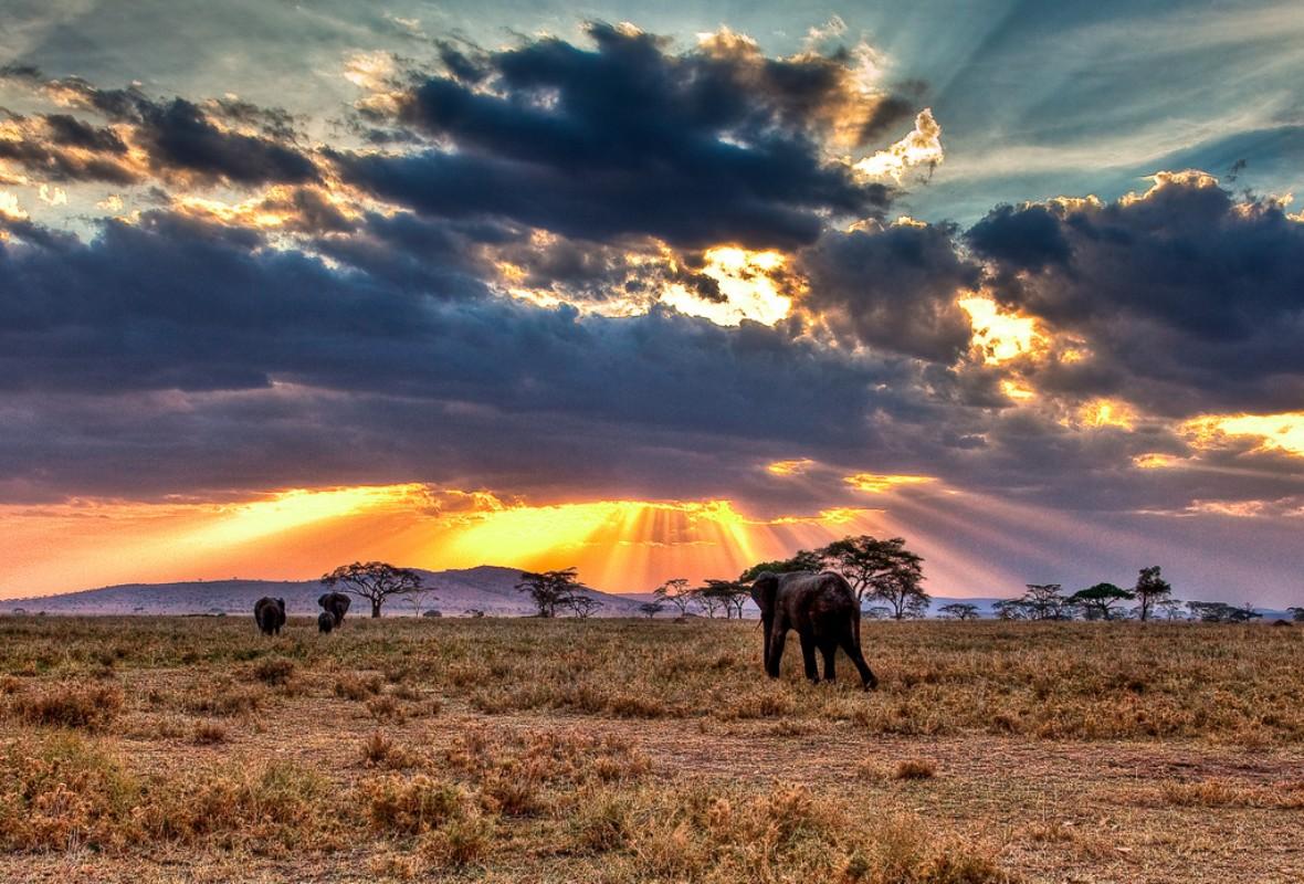 Serengeti nacionalni park