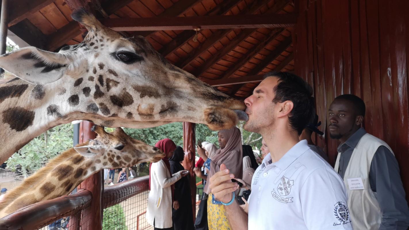 poljubac žirafe