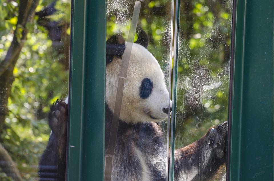zoološki vrt u Beču