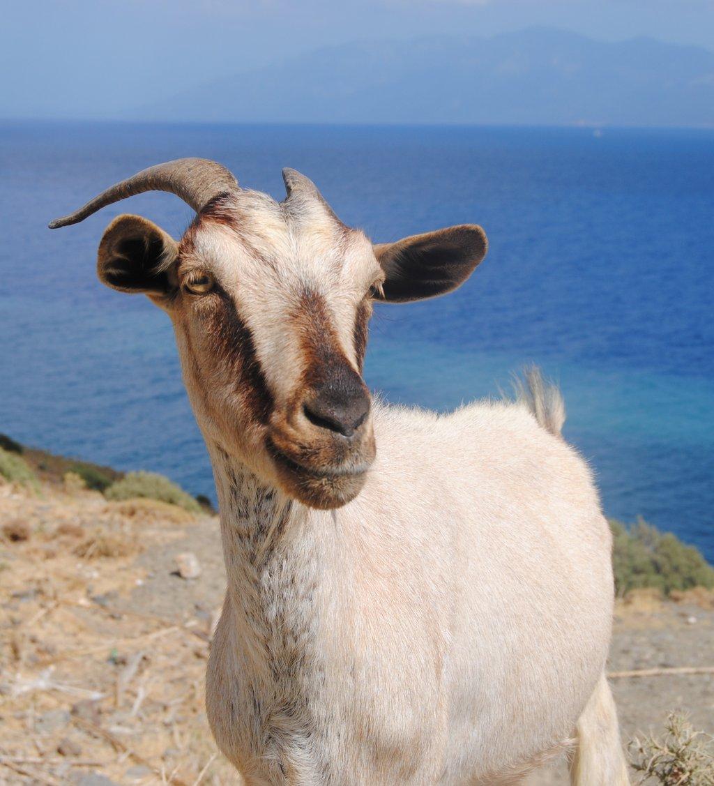 Saznajte razne zanimljivosti o Grčkoj, zemlji mora i sunca