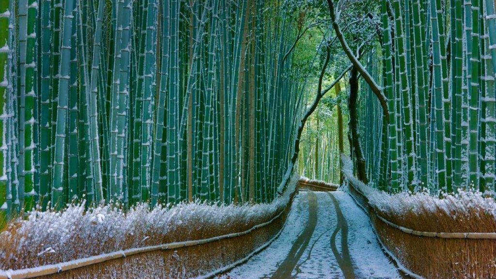 šuma u Japanu