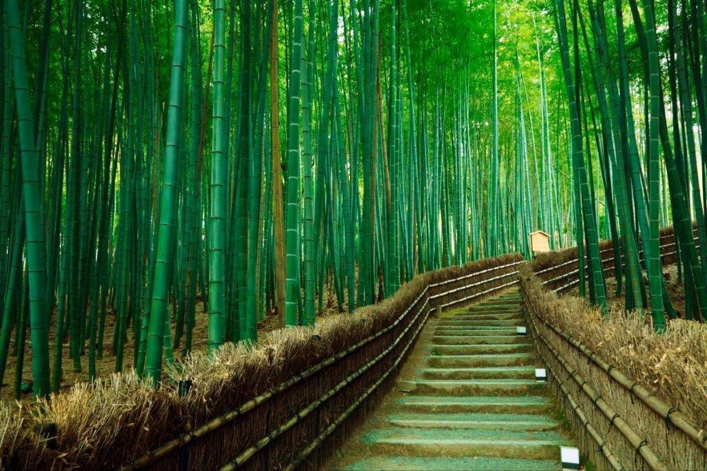 Japan priroda