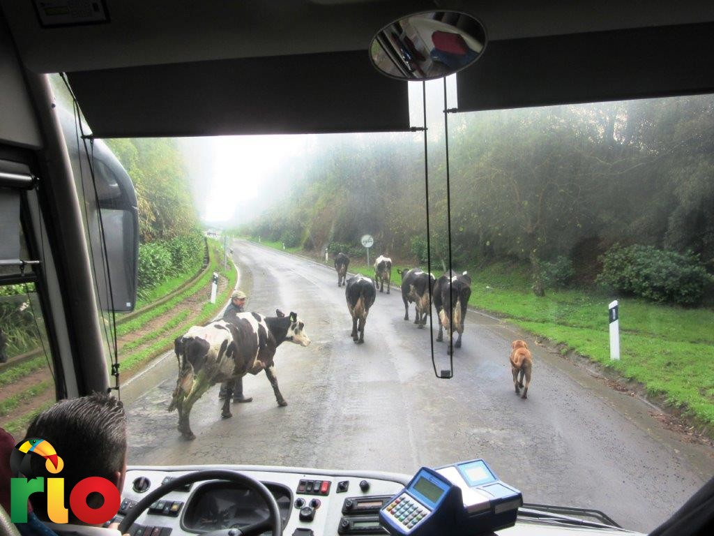 krave na putu