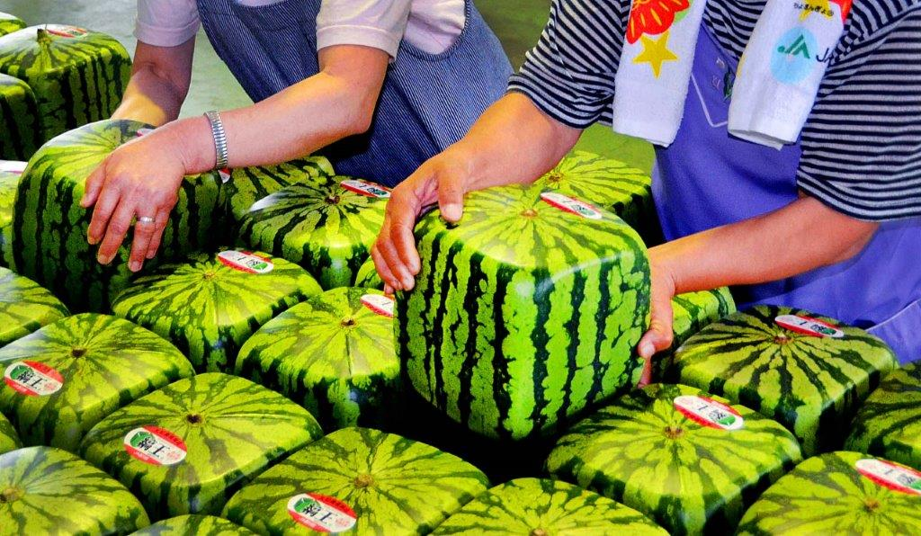 četvrtaste lubenice
