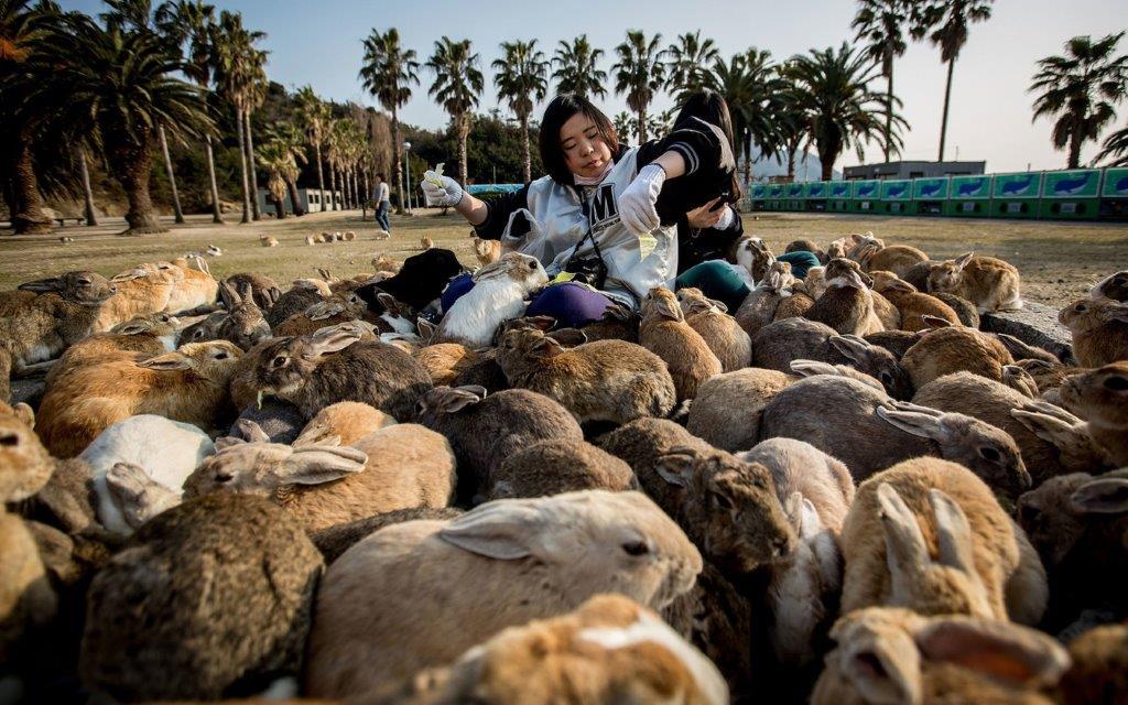 Ostrvo puno zečeva.