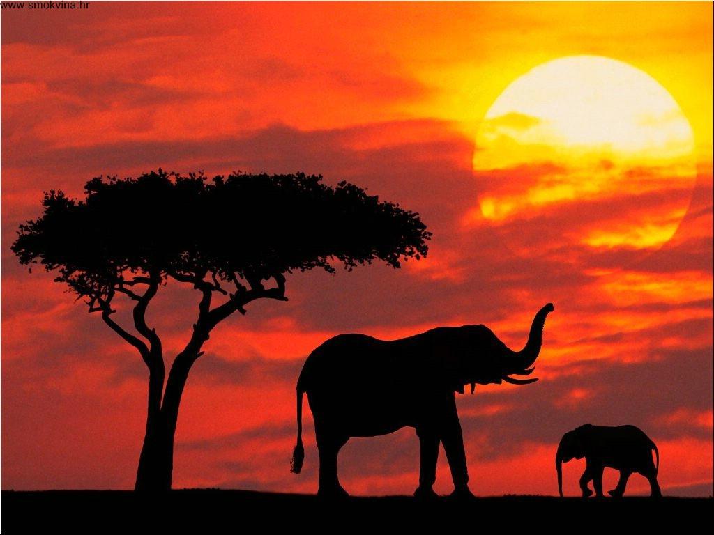 povratne avio karte za Keniju