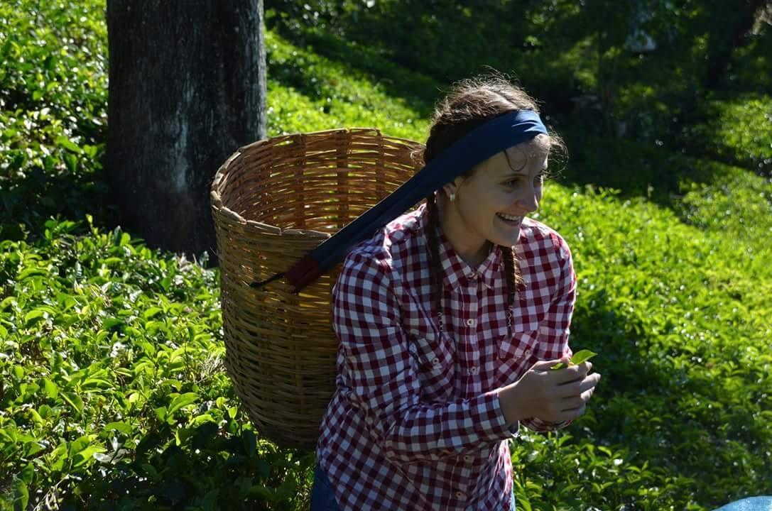 Sakupljanje čaja u Šri Lanci