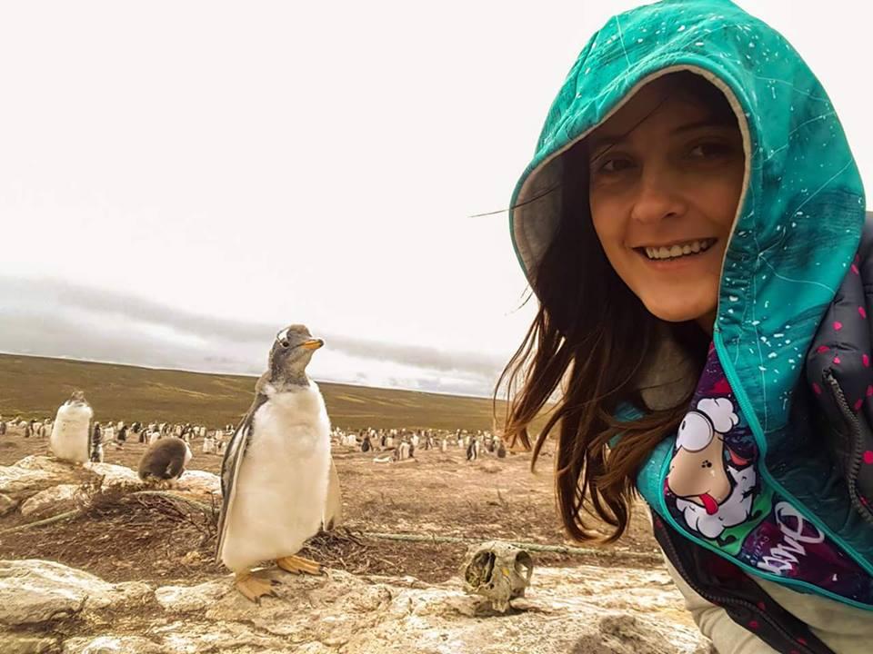 pingvini na Foklandskim ostrvima