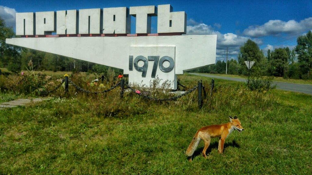 lisica u Pripjatu