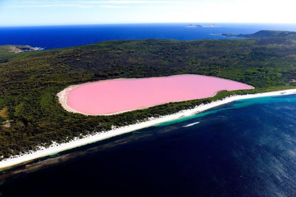 rozo jezero Hillier