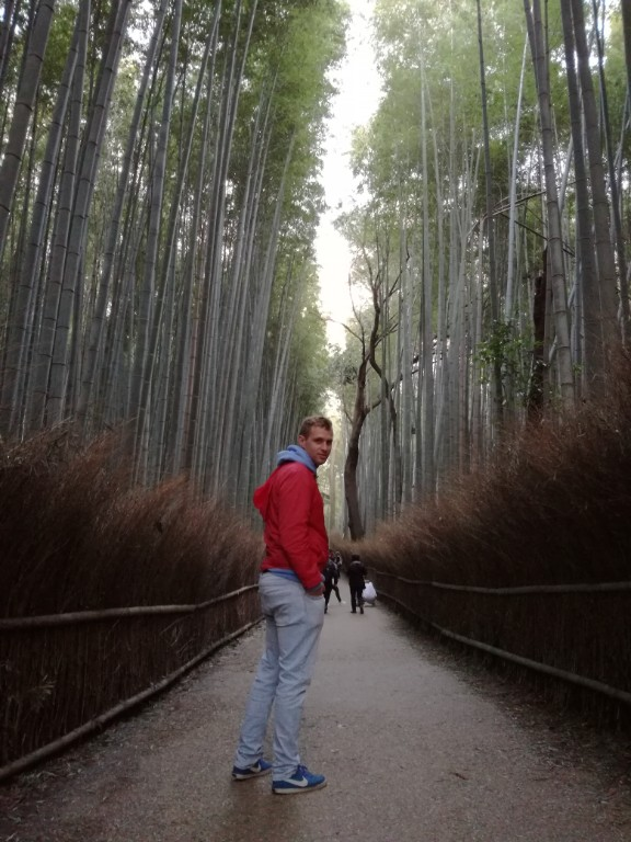 Šuma bambusa