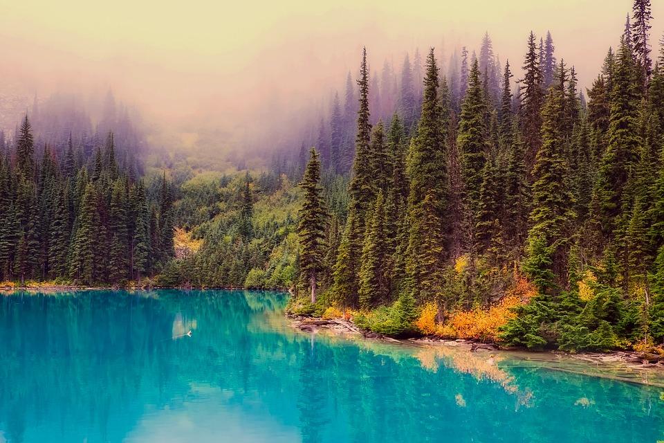 šuma sjeverna amerika