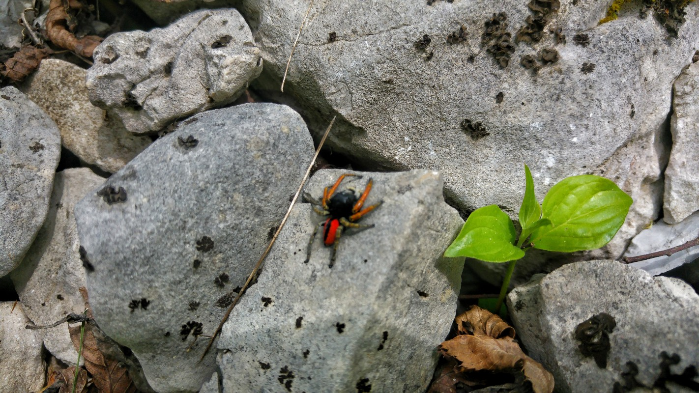 Neobični pauk