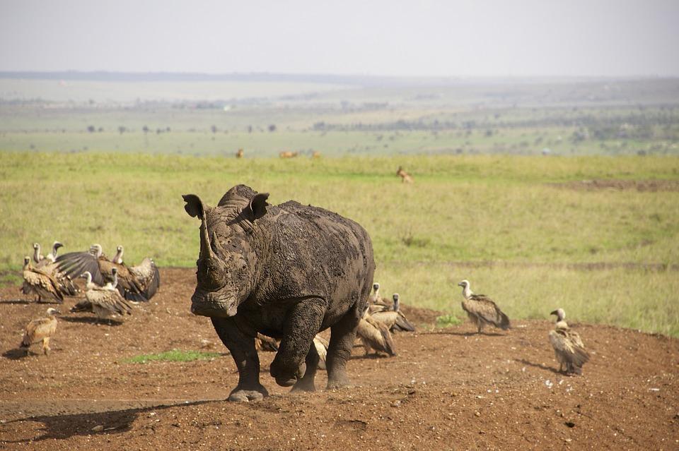 nairobi nacionalni park