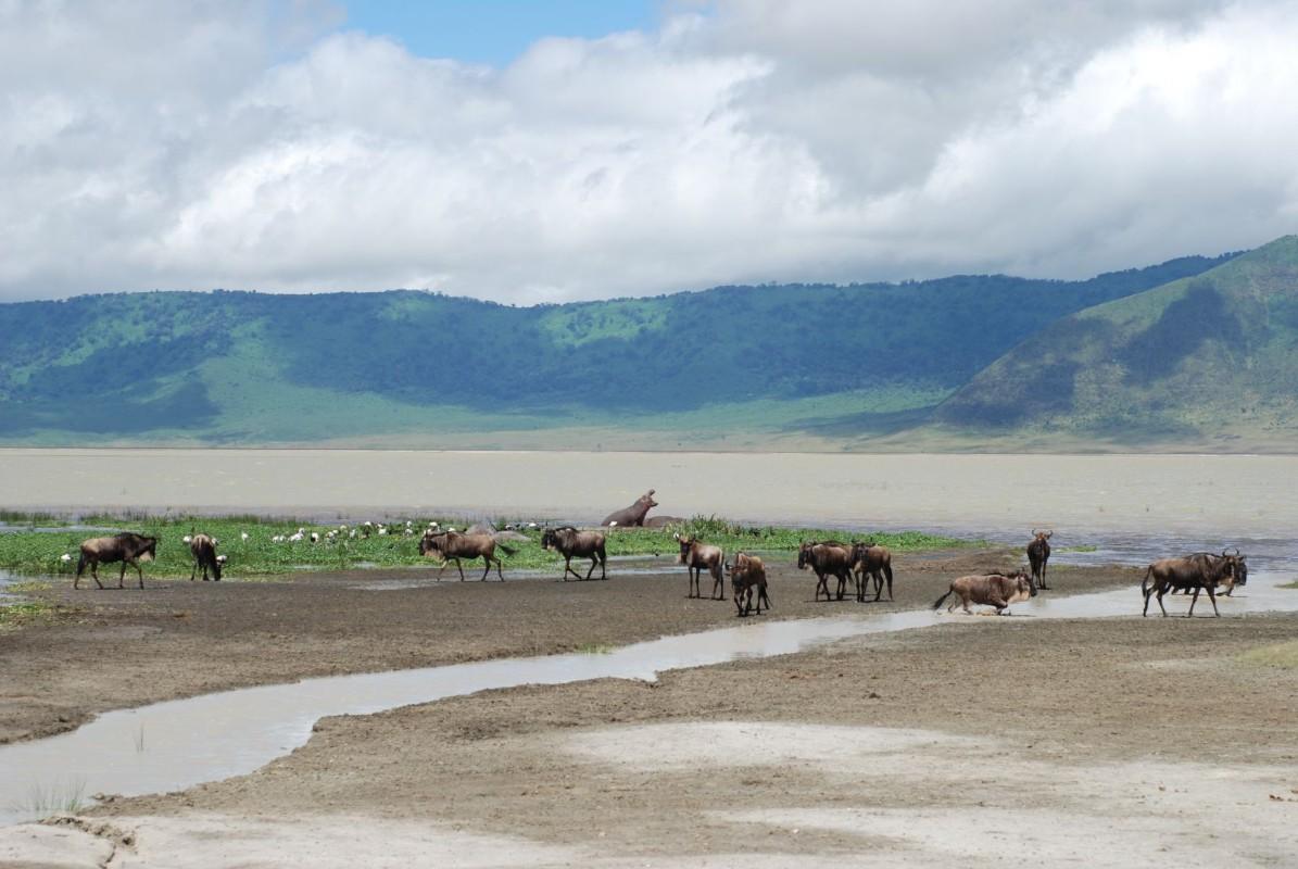 ngorongoro krater - safari u Africi