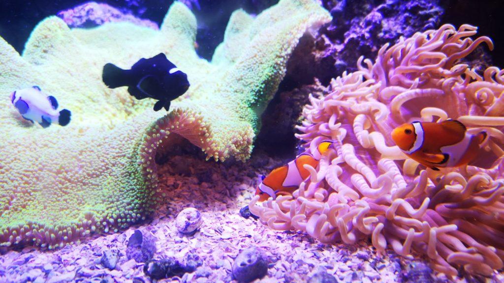 AquaRIo akvarijum