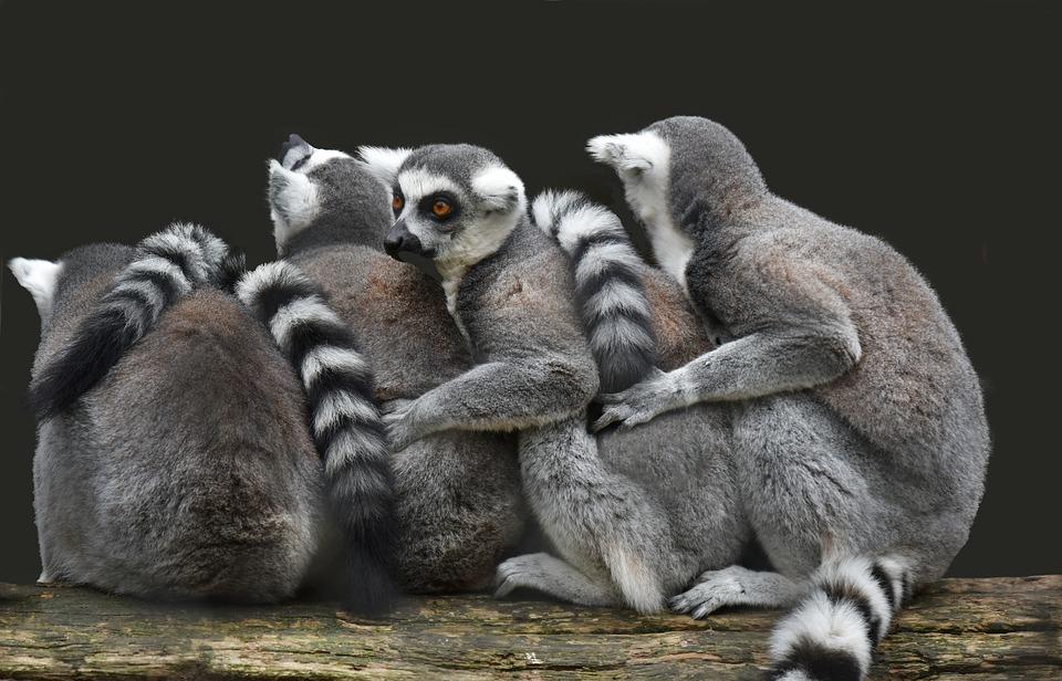 viza za Madagaskar