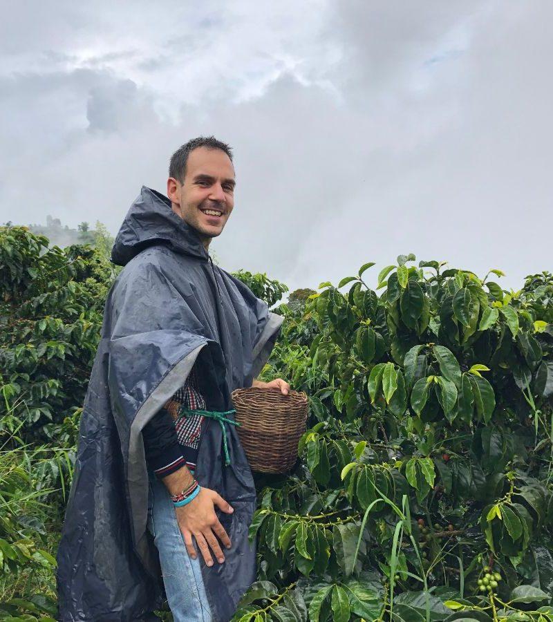 Plantaža kafe u Kolumbiji