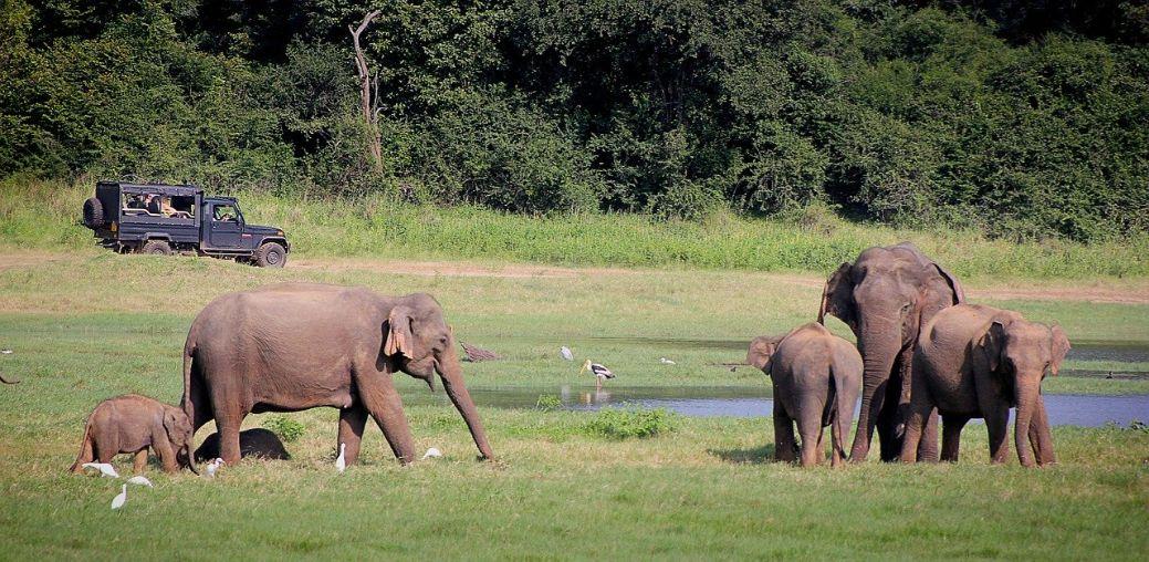Slonovi na Šri Lanci