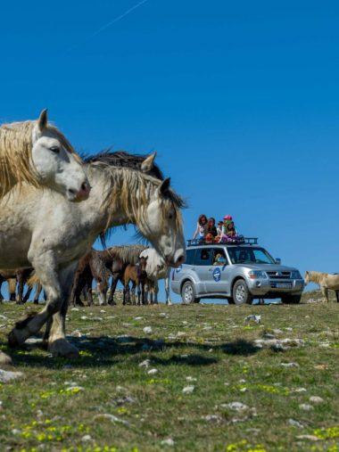 Tura u Livnu za konje