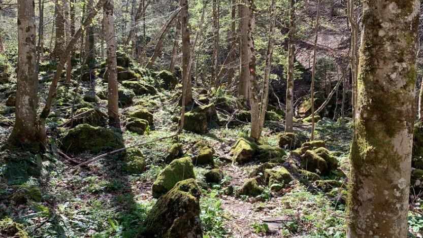 Šuma kod Kotor Varoša