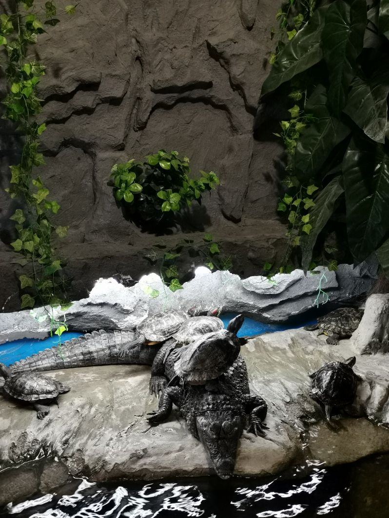 Akvarijum u Šibeniku