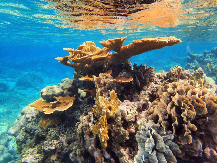 Koralni greben Honduras
