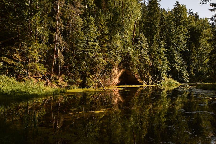 Šuma u Latviji
